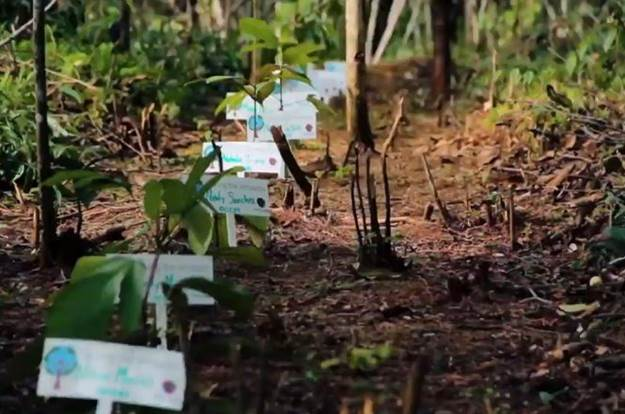 Proyecto Bosques Empresariales para la conservación de la Amazonía.